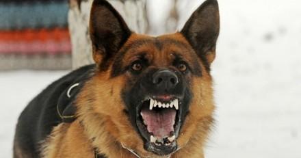 Pourquoi certains chiens grognent ou aboient parfois sur certaines personnes ?