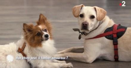 Les chiens peuvent-ils tomber amoureux ? (Vidéo)