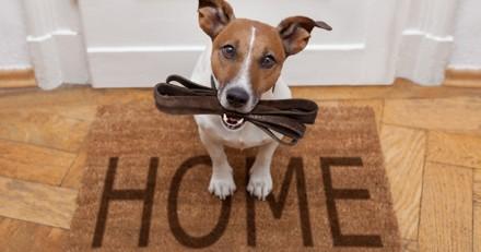 Dans ce nouvel immeuble, seuls les propriétaires de chiens seront acceptés !