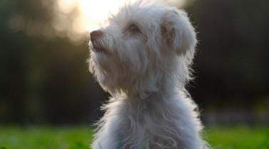 Les 7 gestes d'un propriétaire de chien ou de chat écolo !