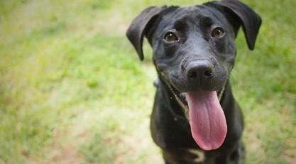 Dois-je faire stériliser ma chienne ? Les conseils d'un vétérinaire