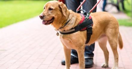 Vers le remplacement des chiens guide par la technologie ?