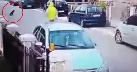 Il tente de voler le sac d'une femme, mais n'avait pas prévu la suite... (Vidéo)