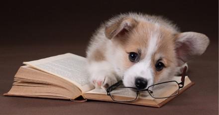 Le chien serait-il capable d'apprendre de ses erreurs ?