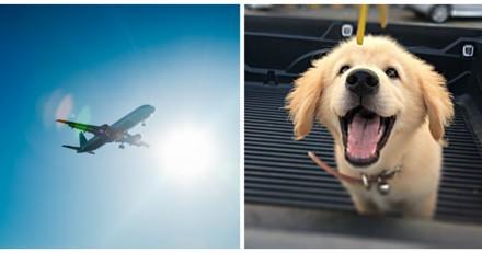 Elle ne supporte pas d'être près d'un chien dans l'avion, quand elle parle à son maître elle comprend son erreur