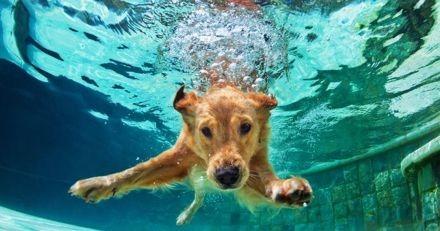 Comment éviter les risques de la baignade avec son chien ?