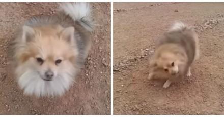 Ce chien a décidé de prendre un bain, mais à sa façon (Vidéo du jour)