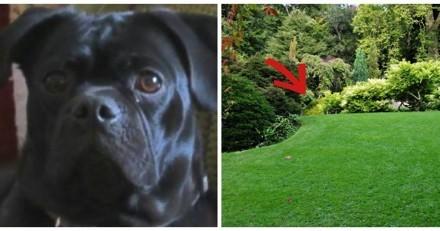 En balade ce chien refuse de bouger, son maître remarque alors quelque chose dans un buisson