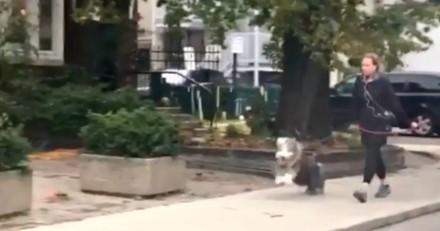 Balade du chien dans la rue : un passant se fige et sort son téléphone quand il voit ce qui se passe !