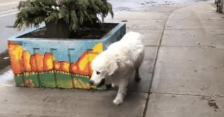 """""""Attend-moi de l'autre côté"""" : le maître partage un clip déchirant de la dernière promenade de son chien"""