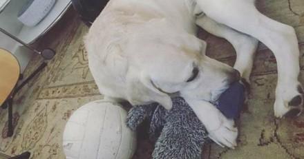 Ce chien a trouvé son âme-sœur, et ce n'est pas du tout ce que vous croyez !