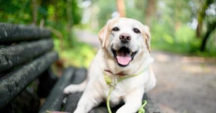 Balade au parc : il voit un chien sur un banc et réalise que quelque chose ne va pas du tout…