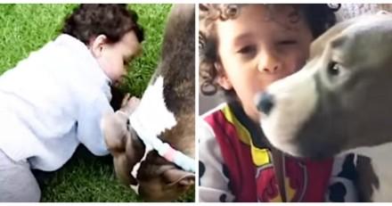 Pour occuper son chien pendant qu'il est à l'école, ce petit garçon a eu une idée adorable (Vidéo du jour)