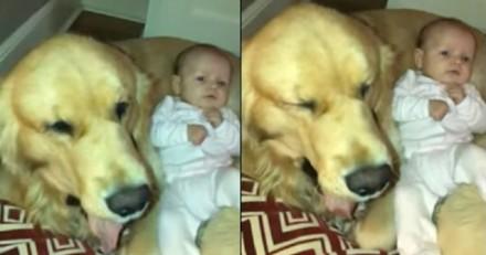 Il filme son chien en compagnie de son bébé, ce que fait le toutou met les larmes aux yeux