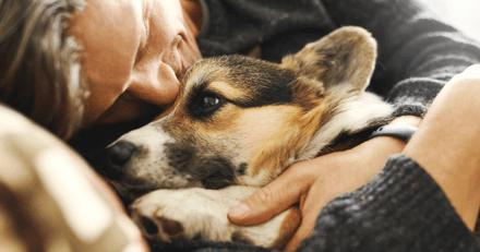 Les animaux de compagnie jouent un rôle clé dans la santé mentale de leur propriétaire