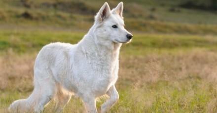Lors d'une balade, son chien s'effondre : la suite donne une vraie leçon à tout le monde