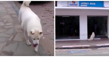 Ce chien fait tous les jours le même chemin, quand les gens comprennent pourquoi ils ont le cœur brisé