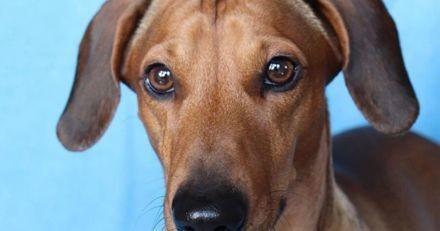 Quand les passants voient ce que ce chien a dans la gueule, ils s'écartent tous pour le laisser passer (Vidéo)