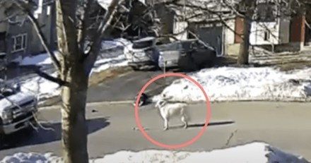 Un chien au milieu de la route arrête une voiture : le conducteur comprend vite pourquoi