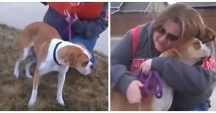 Famille d'accueil, elle attend les futurs maîtres du chien mais réalise vite qu'elle a fait une erreur