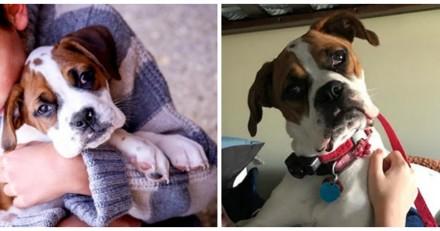 Parce qu'il n'a pas le droit de grimper sur le canapé, ce chien a trouvé l'astuce ultime (et drôle)