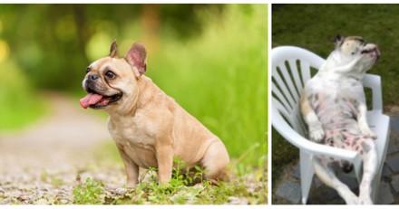"""Le Bon Coin : il poste une annonce à mourir de rire pour trouver une """"fiancée"""" à son chien"""