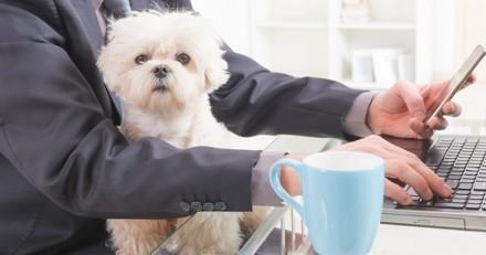 Cette semaine, emmenez votre animal au travail !