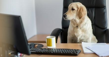 Et si vous alliez travailler avec votre chien demain ?