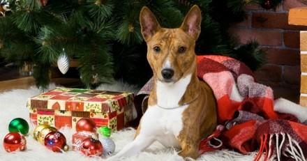 Noël 2017 : 7 idées de cadeaux à offrir à son chien !