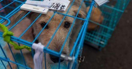 Le ministère de la Justice britannique abandonne un projet de loi sur l'interdiction de consommer de la viande canine