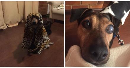 Ce chien aveugle a développé une petite habitude absolument craquante