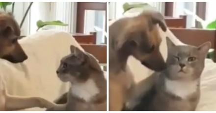 Ce chien en train de caresser un chat a ému le web entier (Vidéo)
