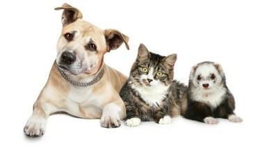 Peut-on transmettre la grippe à son chien, chat ou furet ?