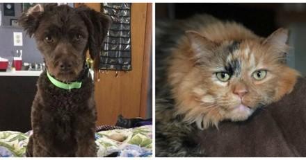 En rentrant chez elle, elle n'en revient pas de ce que font son chien et son chat, la vidéo fait le buzz
