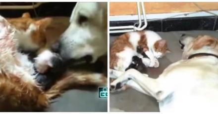 Ils filment leur chatte qui va avoir ses petits, le chien arrive et fait quelque chose d'incroyable
