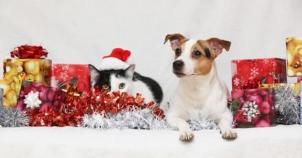 Nouvelle édition du Noël des bêtes abandonnées en 2018