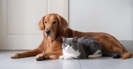 Probiotiques et animaux de compagnie : une solution efficace et naturelle pour un bien-être renforcé
