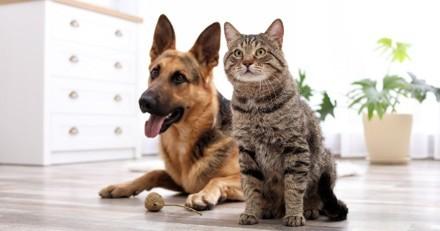 3 signes que votre chien ou chat a des vers intestinaux, et comment le soigner