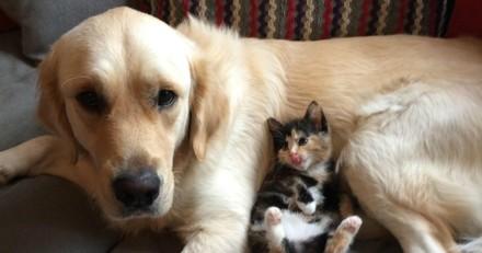 Cette petite chatte a les deux plus adorables gardes du corps, et elle en est très fière (Photos)