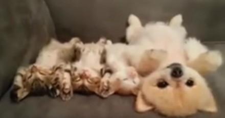 Encerclé par 3 chatons,  ce chien a la plus adorable des réactions (Vidéo du jour)