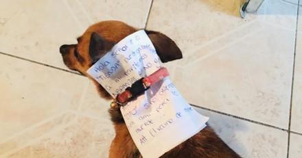 En plein confinement, il envoie son chien lui acheter des chips : la réaction du toutou fait le tour du monde