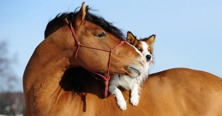 Ce chien sauvé d'une ferme à viande est ami avec un cheval (Vidéo)