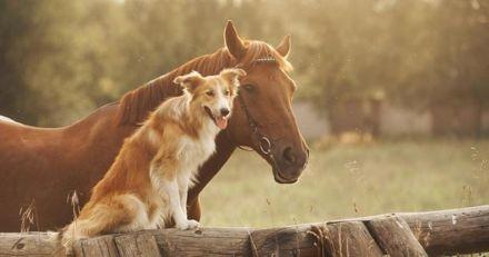 Chaque jour, ce chien est trop heureux de venir apporter un goûter à son cheval préféré (Vidéo)