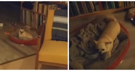 Après 2 longs mois d'absence, il rentre chez lui, ce que fait son chien lui met les larmes aux yeux (Vidéo)