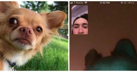 En pleine conversation FaceTime, le chien de sa chérie le fait exploser de rire