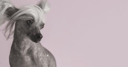 Mariés au premier regard : Elvis, le chien de Cécile, attise les moqueries à cause de son physique atypique