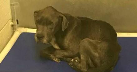 Ce chien a été balancé par-dessus la clôture d'un refuge, aujourd'hui tout a changé pour lui