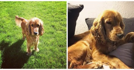 Son chien n'arrête pas de tourner sur lui-même, le vétérinaire lui annonce la plus choquante des nouvelles