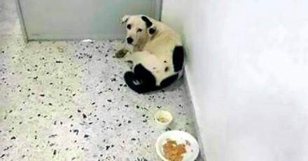 Abandonné dans un aéroport, ce chien est mort d'un « cœur brisé »