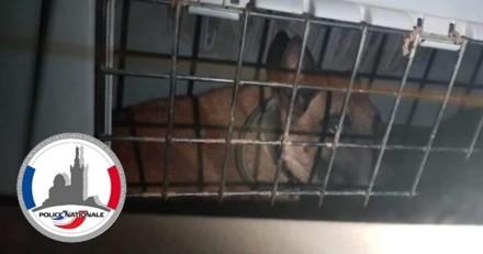 Chien enfermé dans le coffre d'une voiture depuis des mois : la réponse de son maître glace le sang des policiers